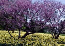 Morton Arboretum 2