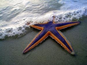 starfish_5_v1