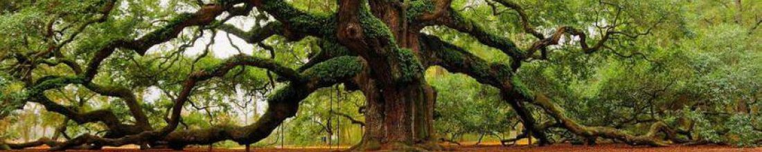 cropped-cropped-1500-year-old-angel-oak-in-charleston-south-carolina.jpg