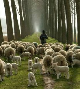 Our Job is to Lead People to the Good Shepherd Not Ourselves