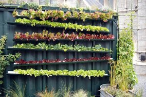 Garden idea 2 (Salad garden in gutters)