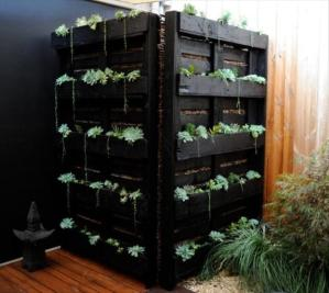 Indoor or outdoor pallet garden.