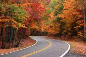 Fall-Foliage-by Jacquelyn Rickard