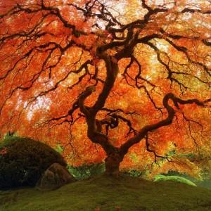 Fall - tree - nature - orange leaves - autumn leaves - fallt ree via pinterest