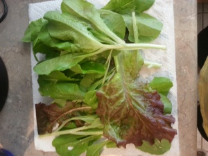 Garden Lettuce, Just Washed And Waiting for My Tastebuds!