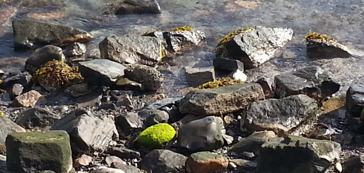 Moss in Bar Harbor at Low Tide