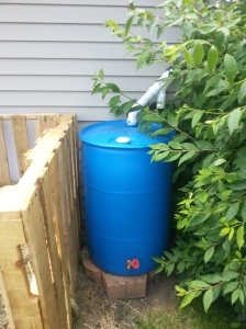 New Rain Barrel Setup Compliments of My Ingenious Son-in-Law