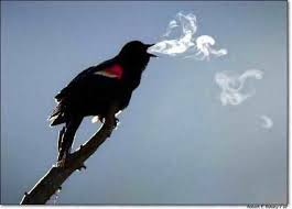 A Bird's Breath on a Cool Morning or a Cloud?