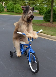 Bike Riding Dog