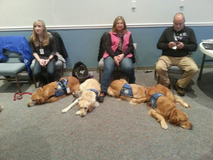 Some of the Dogs from Lutheran Ministries (Comfort Dogs)