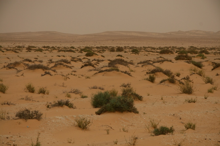 western-sahara-desert-scape