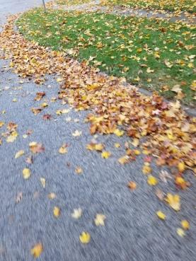 yellow-carpet-ride