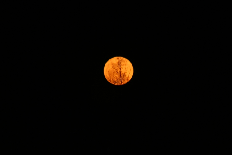 Last Night full moon