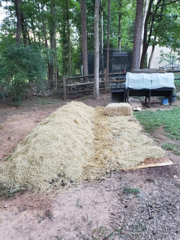 Stage 6: Covered with Hay