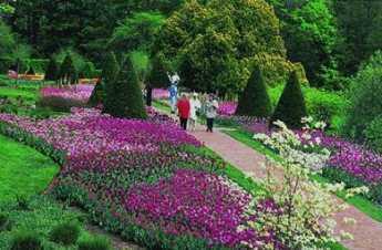 Philly Garden 6